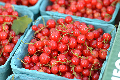 red-currants_6-23.jpg