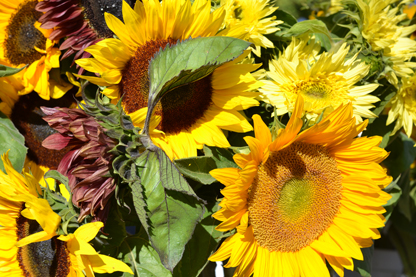 sunflowers_6-30.jpg