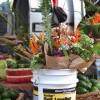Thumbnail image for December at the Santa Barbara Farmers Market and a few Extras