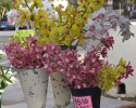 Thumbnail image for Winter at the Santa Barbara Farmers Market
