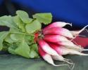 Thumbnail image for March at the Santa Barbara Farmers Market