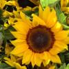 Thumbnail image for May at the Santa Barbara Farmers Market