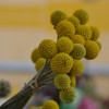Thumbnail image for June at the Santa Barbara Farmers Market
